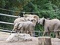 Verleihung der EGHN-Plakette an den Zoo Wuppertal 002.jpg