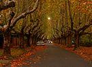 Victoria Avenue - Canterbury.jpg