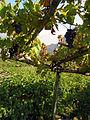 Vigneti a terrazze, Donnas, DSCN9445.JPG