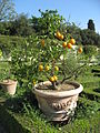 Villa Castello Florence Apr 2008 (13).JPG