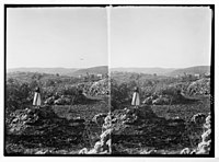 Vineyard (at Ain Yabrud) girl picking figs. Fig & olive orchard, and vineyards in ancient Ephraim (Taibeh). LOC matpc.03277.jpg