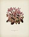 Vintage illustrations by Benjamin Fawcett for Shirley Hibberd digitally enhanced by rawpixel 81.jpg