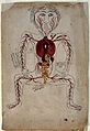 Viscera and arterial system, watercolour, Persian, 19th C Wellcome V0046493.jpg