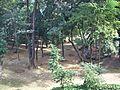 Vista do bosque do CAU do Unileste, Coronel Fabriciano MG.JPG