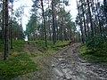 WILCZE ŁUGI lato 36 - panoramio.jpg