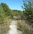 Waldweg - panoramio (16).jpg