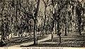 Walnut grove lake charles la postcard 1910.jpg