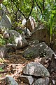 Wanderweg auf den Seychellen (38706421755).jpg