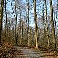Wanderweg von Ratzeburg nach Rothenhusen.jpg