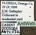 Wasmannia auropunctata casent0005064 label 1.jpg