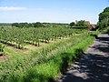 Wenderton Lane and orchard - geograph.org.uk - 847685.jpg