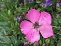 Wet Flower 2 (60556666).jpeg