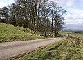 Wetstonebank Plantation - geograph.org.uk - 364643.jpg