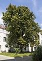 Wien 15 Naturdenkmal 650 a.jpg