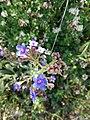 Wild Purple flowers.jpg