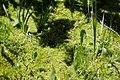 Wilder Gulch Trail (6129306140).jpg