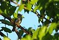 Wildlife birds 15 - West Virginia - ForestWander.jpg