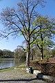 Wilhelminapark Breda P1360773.jpg