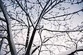 Winter Tree (Unsplash).jpg
