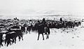 Winter herding in the American West.jpg