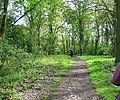 Woodland Path, Hainault Forest Country Park - geograph.org.uk - 798643.jpg