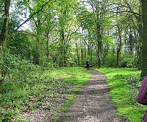 Hainault Forest - Woodland path — a public footpath in the park.
