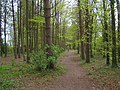 Woodland Path - geograph.org.uk - 815227.jpg