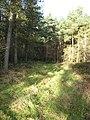 Woodland Ride. - geograph.org.uk - 623402.jpg