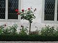 Wurmsbach Rose.jpg