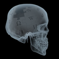 X-ray of Wikipedian.png