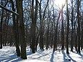 Xaverovsky haj v zime.jpg