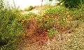Yakima Greenway - panoramio (10).jpg