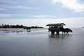 Yubu Island Okinawa Pref Japan23n4592.jpg