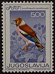 Yugoslavian stamp with Coccothraustes coccothraustes 1968.jpg