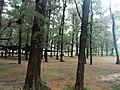 Yuguang Island Pine Grove 漁光島松林 - panoramio.jpg