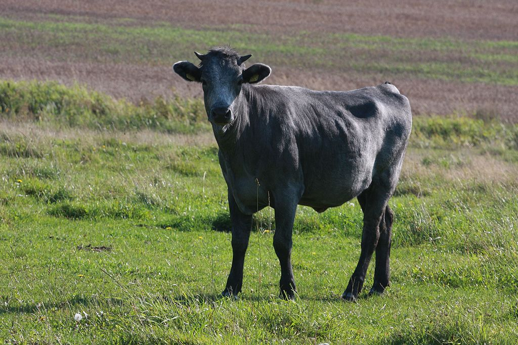 Zila govs.jpg