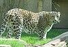 Zoo hannover 9.JPG