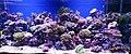 Zootopia aquarium.jpg