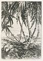 'Palms', etching by Amelia R. Coats, c. 1920s.jpg