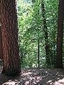 (PL) Polska - Warmia - Las Miejski w Olsztynie - The City Forest in Olsztyn (28.VIII.2012) - panoramio (29).jpg