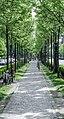 Аллея недалеко от площади Героев (10890170076).jpg