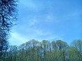 Битцевский парк. Ясенево.jpg