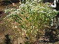 Ботанический сад г. Одесса.jpg