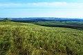 Вид с Хуторской горы в юго-западном направлении - panoramio.jpg