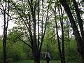 Дендрологічний парк 246.jpg