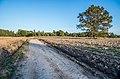 Дорога и обработанное поле - panoramio.jpg