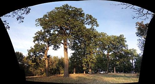 Дубовий Гай Кремінна Панорама.jpg