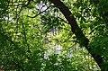 Дубовий гай з природною водоймою. Фото 2.jpg
