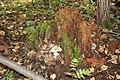 Замшелый пень с грибами. Новодеревенский лес. Чистопольский р-н. РТ. Август 2013 - panoramio.jpg