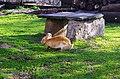 """Зајак како дел од дворот на манастирот """"Св. Ѓорѓи"""" 2.JPG"""